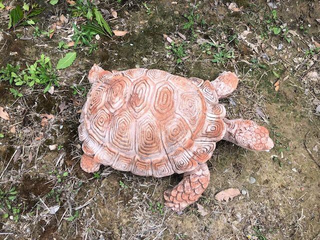 Tartaruga gigante 57L 47P 18h